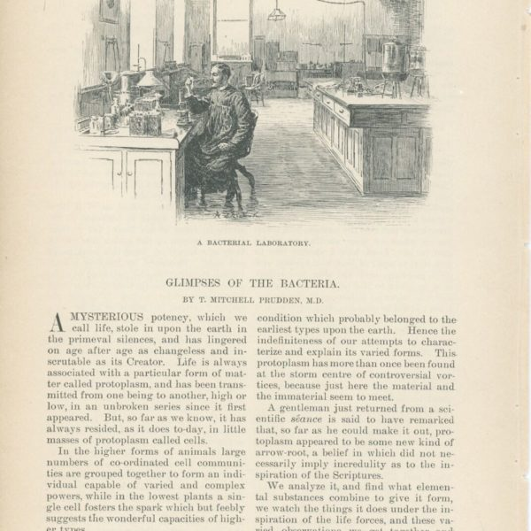 1891 Glimpses of Bacteria Article Early Science Medicine Study Culture Tubes