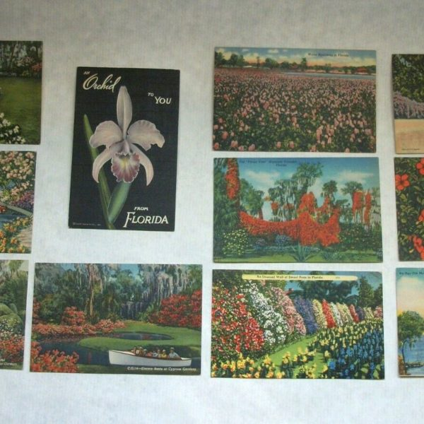 Colorful Unused Vintage Linen Postcards of Flowers All from Florida Lot of 11