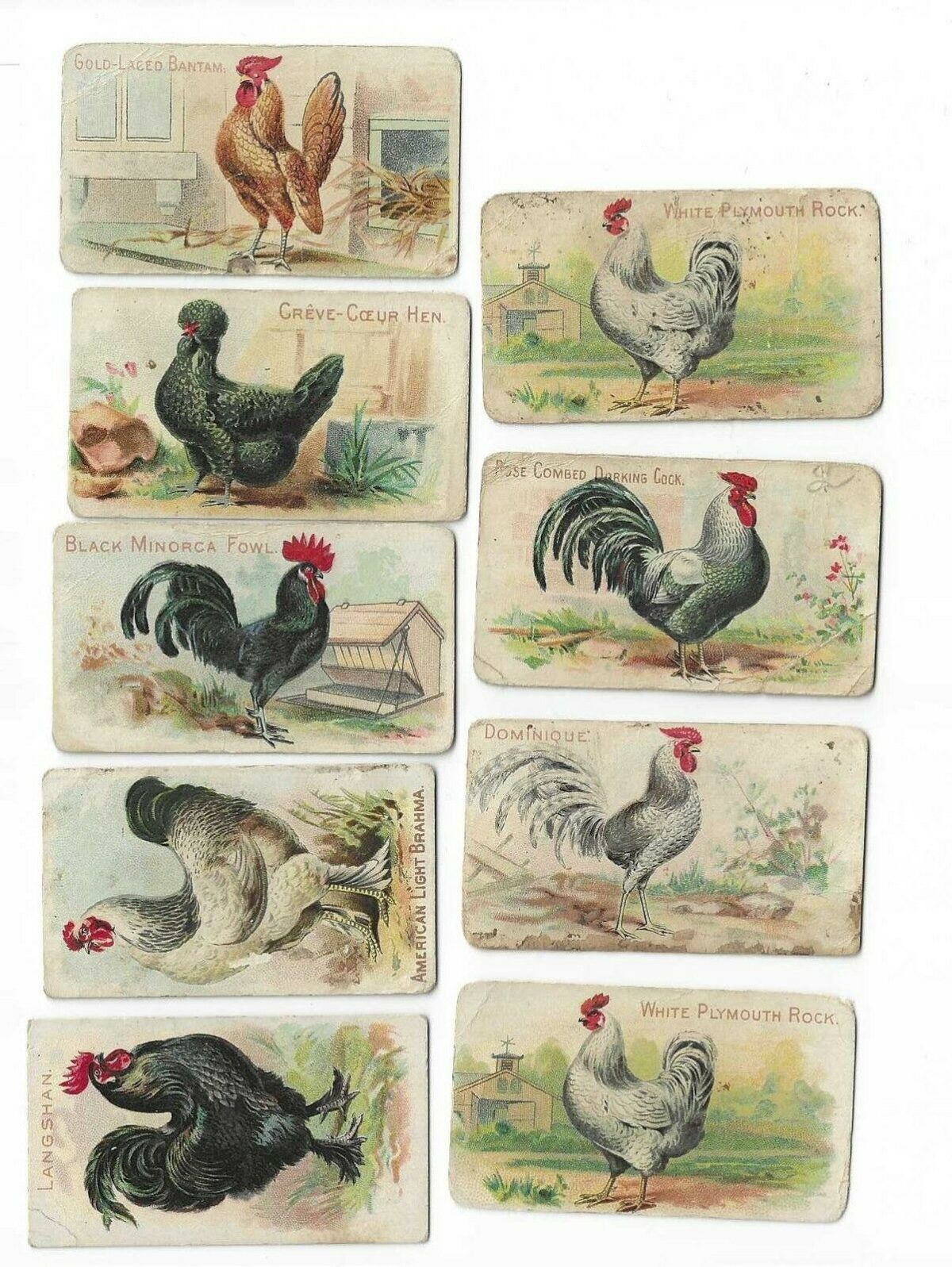 Zoo Cards Chickens 1907 Philadelphia Caramel Co. Lot of 9 Trading Cards E31
